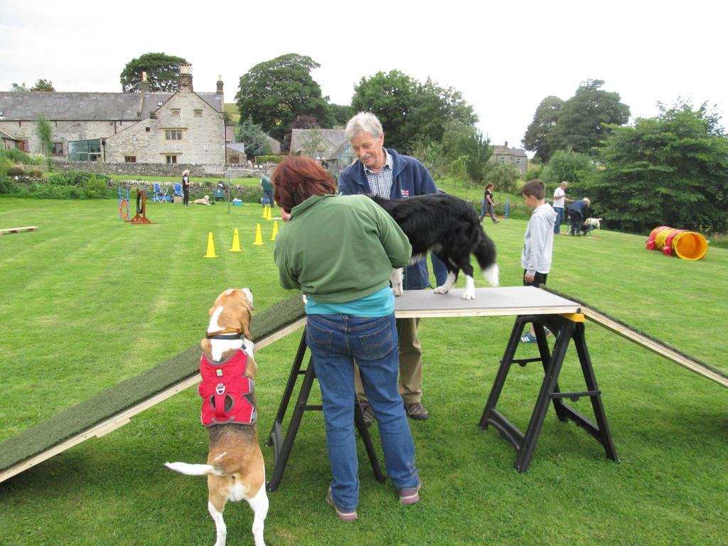 Dog Training Macclesfield
