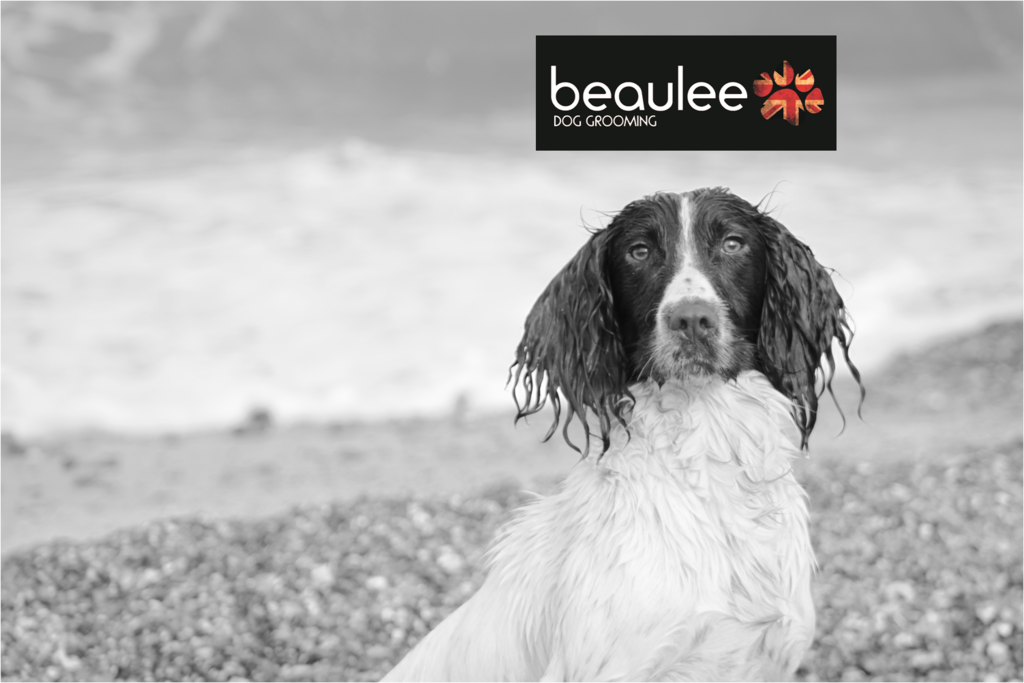 Beaulee Dog Grooming Norwich