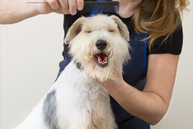 Dog Grooming Offers Liverpool
