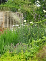 Herbaceous border in Goatstown