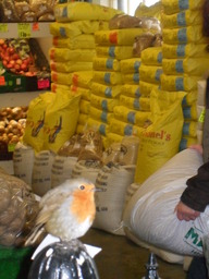 Jimmy the shop Robin