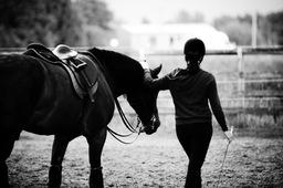 equestrian portriat