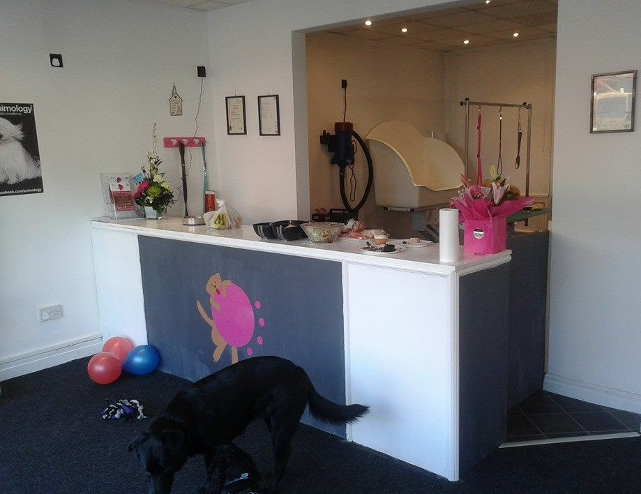 Opening A Dog Grooming Salon