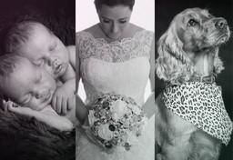 wedding, pet, newborn photography
