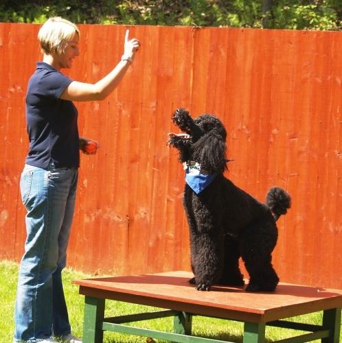 Royvon Dog Training Reviews