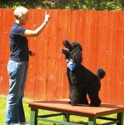 Dog Training Esher Surrey