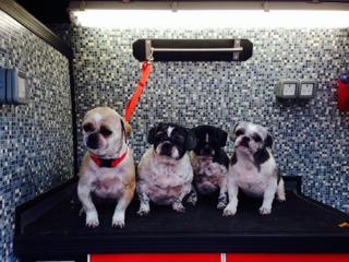 Mobile Dog Grooming Bedford