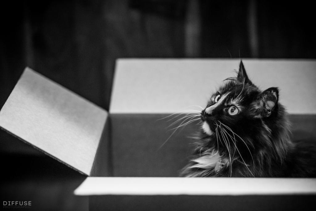 Cats Protection Lancashire
