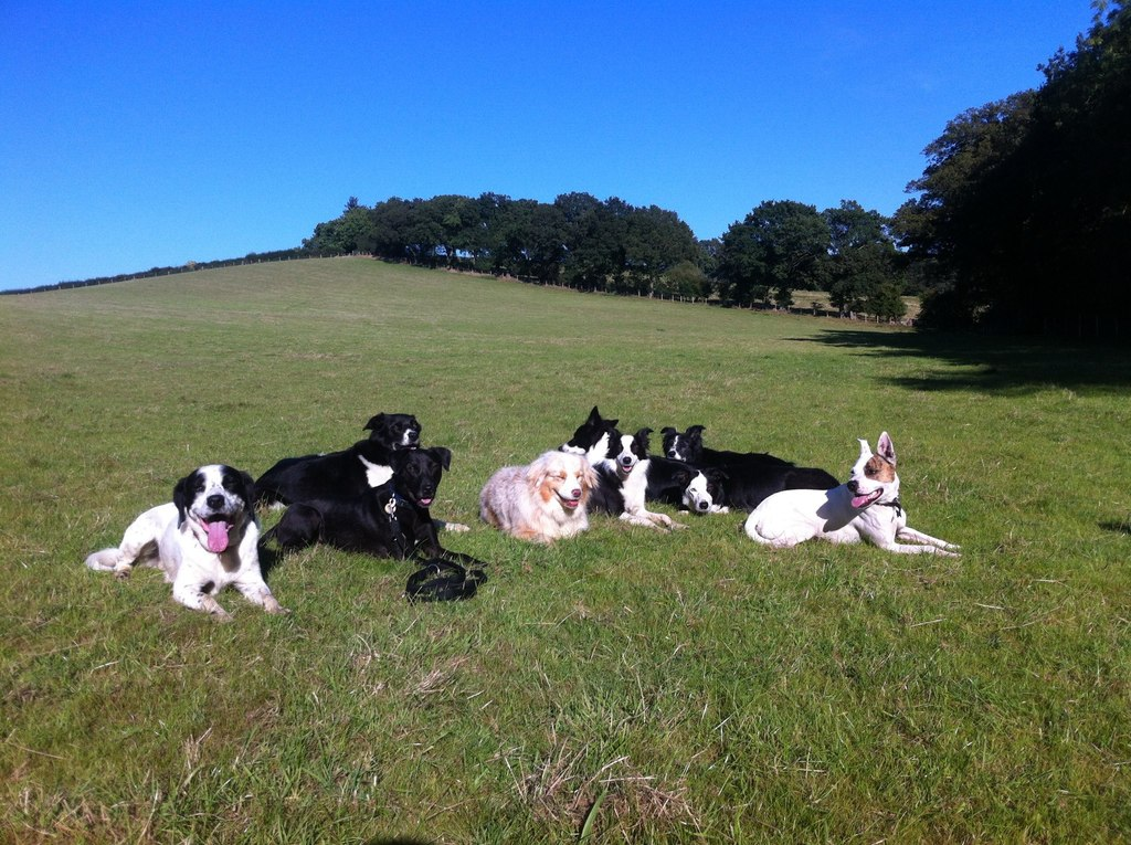 Dog Home Boarding In West Sussex