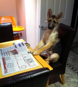 Gsd Frankie Reading Paper