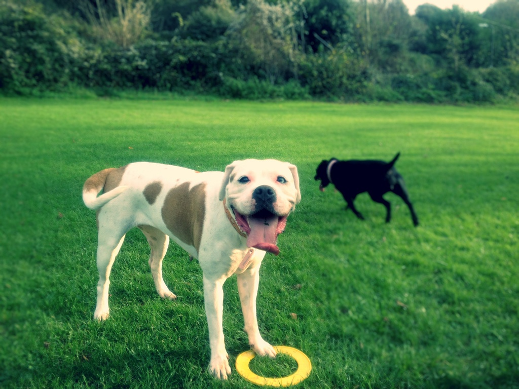 Dog Walking Services Basingstoke