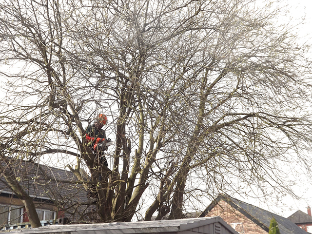 Acre wood tree garden services 29 reaper close for Tree and garden services