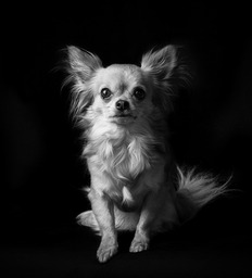 Pet portrait by, Timothy Large LSWPP