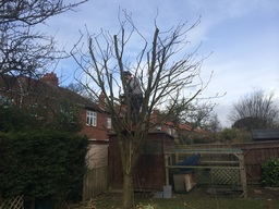 Pruning in Gosforth