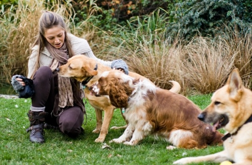 Image Result For Dog Training Classes West Midlands
