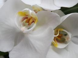 Bride S Bouquet Phalaenopsis Orchids Detail 2