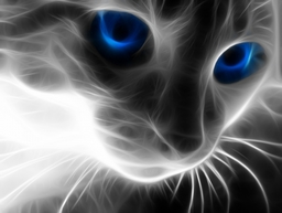 Wallpaper Cat Blue Eyes