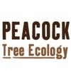 Peacock Tree Ecology