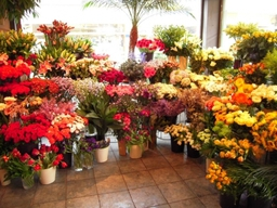 Inside - Edith Wilmot Bristol Florist