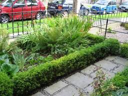 Victorian Front Garden in Phibsboro