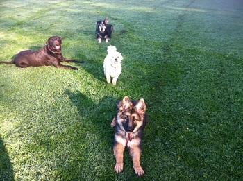 Dog Kennels Yate