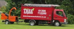 Tree Surgeons Dorking