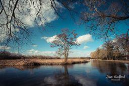 Stoke Meadows