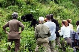 Bwindi Gorilla Tracking in Bwindi Impenetrable National Park