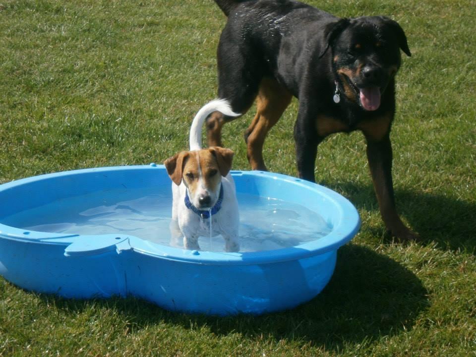 Dog Day Care Winsford