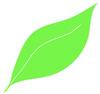 Evergreen Photography
