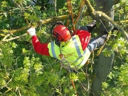 Tree Surgery Burton on Trent