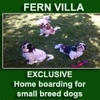 Fern Villa Exclusive Home Boarding for Small Dogs