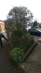 Weeding and Pruning in Maidenhead
