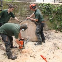 Tree Removal London