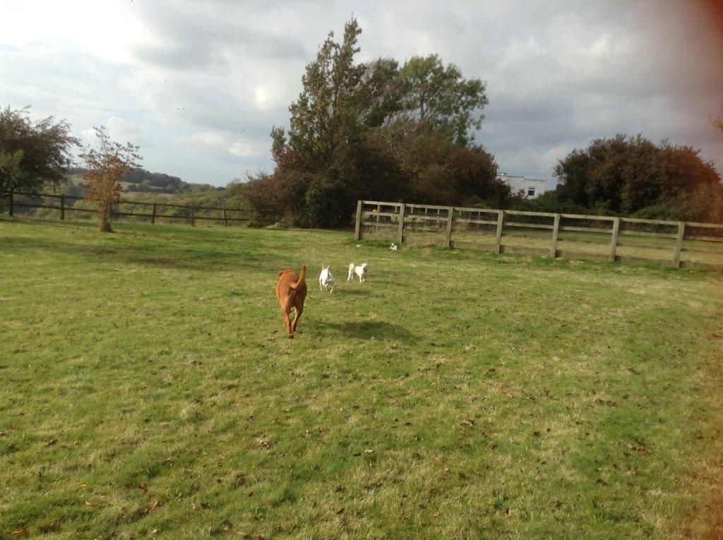 Woodlands At Home Free Range Dog Care