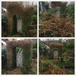 Hedge crew cut and garden clearance