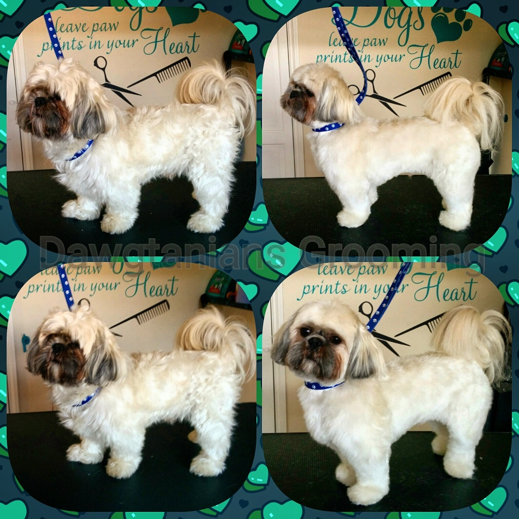 Dog Grooming Nottinghamshire