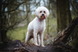dog photography on location in lancashire