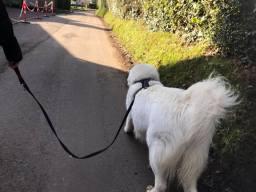 Loose lead walking training