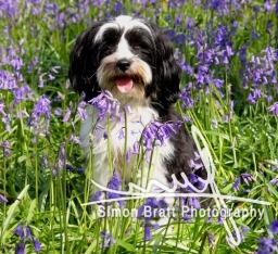Pet Photography in wild bluebell woods in Hampshire UK