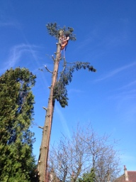 Sectioning down, a controlled way of tree removal