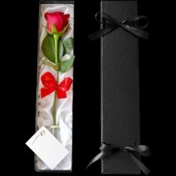 Valentine's Day Rose One Love