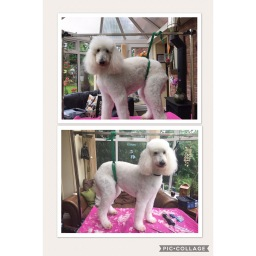 Before & After of the gorgeous Daisy