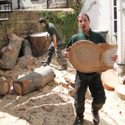 Tree Surgery Services In London
