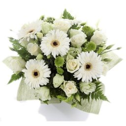 Gerbera Delight - Home of Flowers - Westcliff