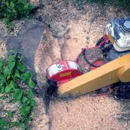 Stump Grinding Services in Surrey