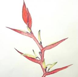 watercolour pencils, Saturday kids class