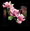 Malwa Flowers
