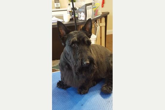 Dog Grooming Thorney