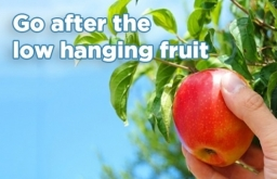 Low Hanging Fruit Search Engine Marketing In Birmingham
